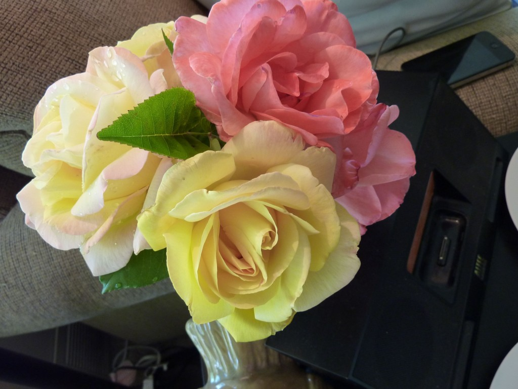 I placed fresh roses from my garden in a Mason jar...