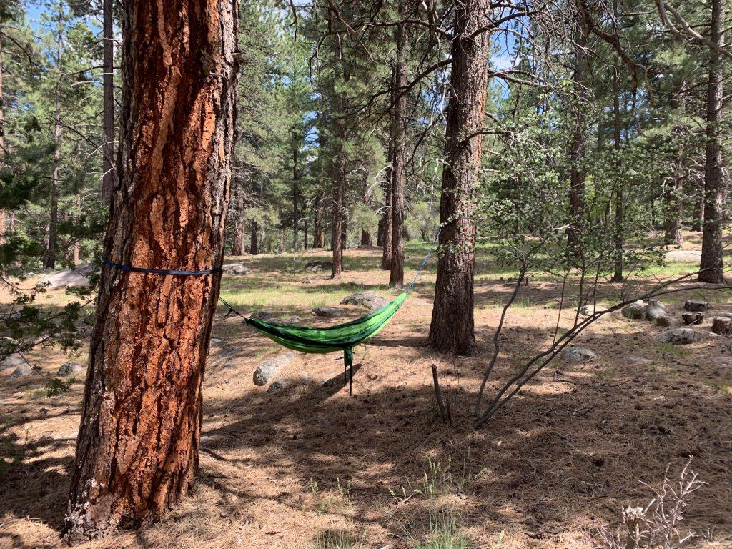 hammock hanging from ponderosa